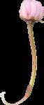 пионы (60).png