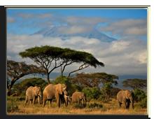 Кения. Фото dmussman - Depositphotos