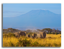 Кения. Family of elephants walking in front of the Kilimanjaro mountain. Amboseli National Park. Фото  Francois_Gagnon - Depositphotos