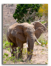 Кения. Масаи Мара. Фото LisaStrachan - Depositphotos