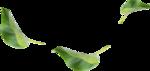 kimla_WFTS_leaves.png