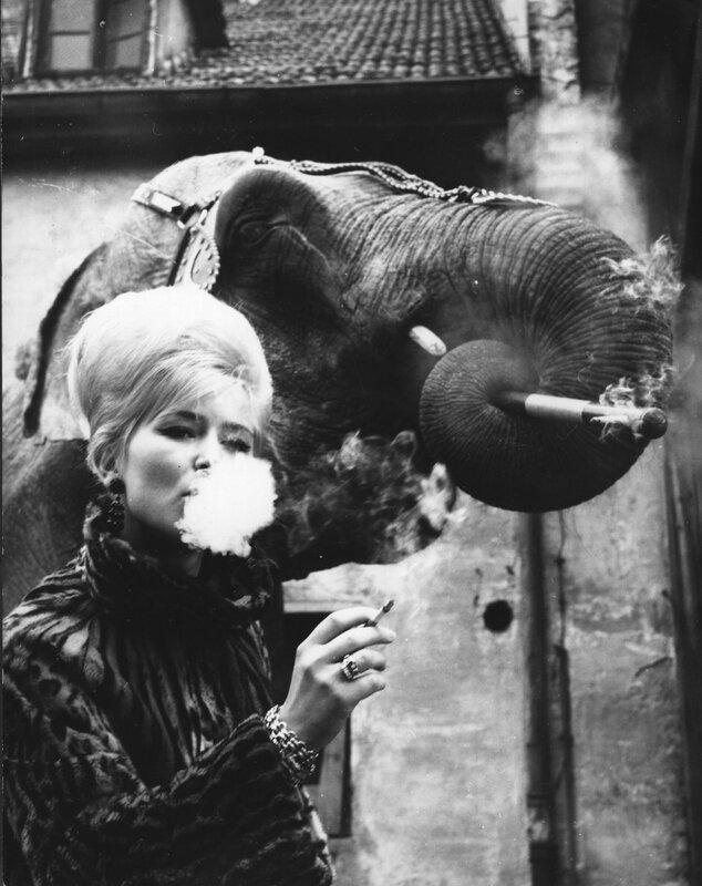 Smoking Elephant