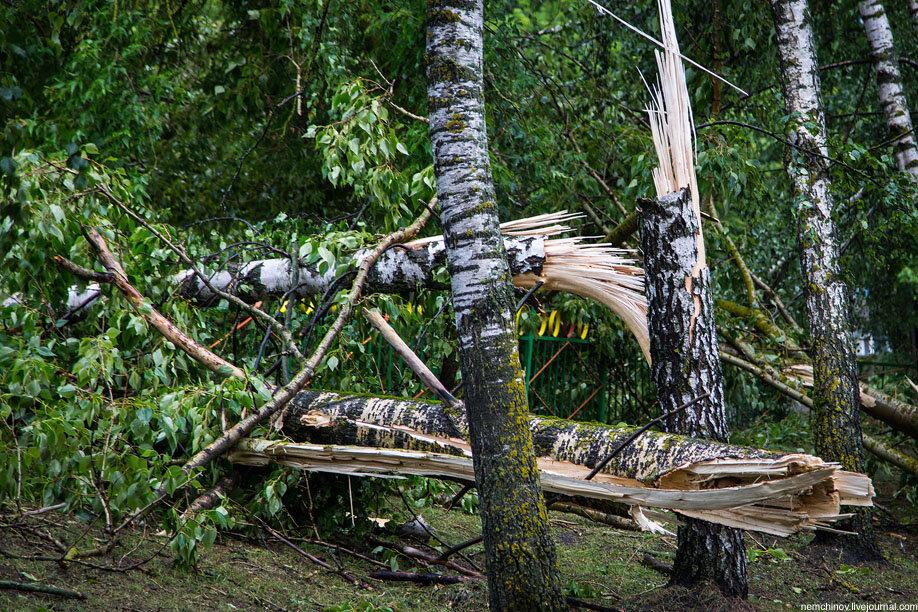 картинка сломанная ветка дерева