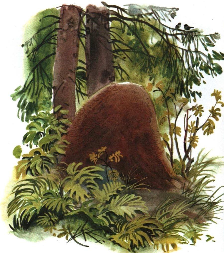 Картинки муравейника для детей нарисованные