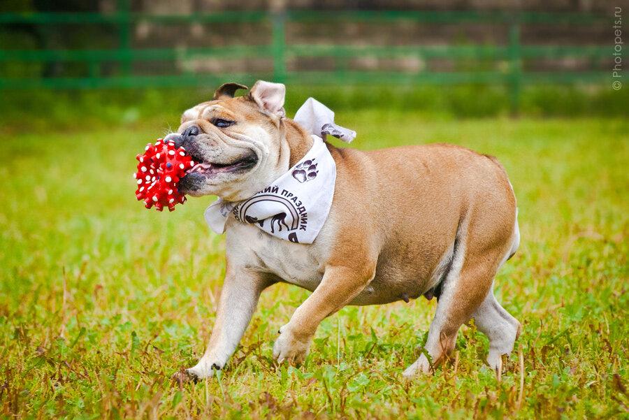 праздник собака плюс я