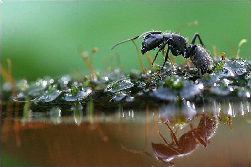 Под дождем (15 фото)