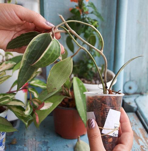 Растения полученные из Тюмени. Отзывы, хвасты!!! - Страница 2 0_64629_fb308ba_L
