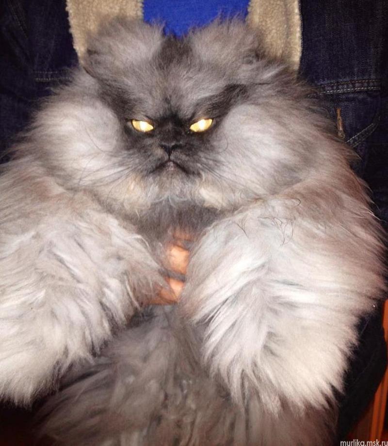 Страшный кот версия 2.0