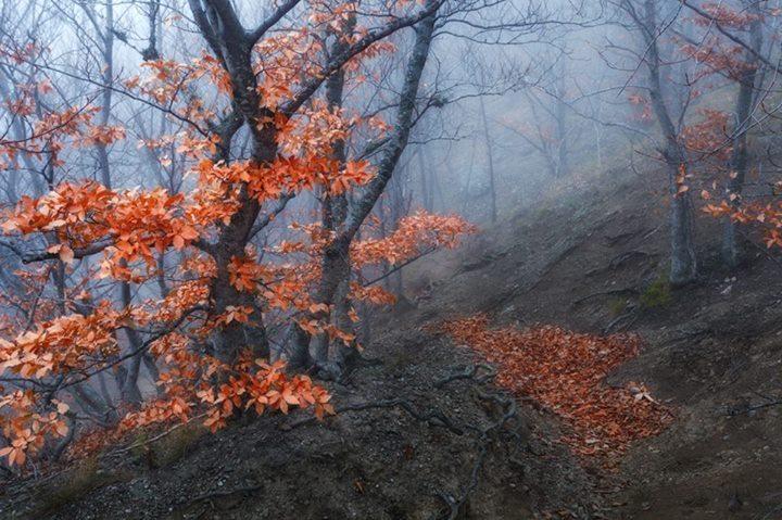 Фото: Анатолий Гордиенко