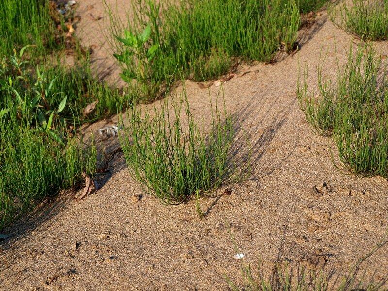 пустынная растительность песчаного острова