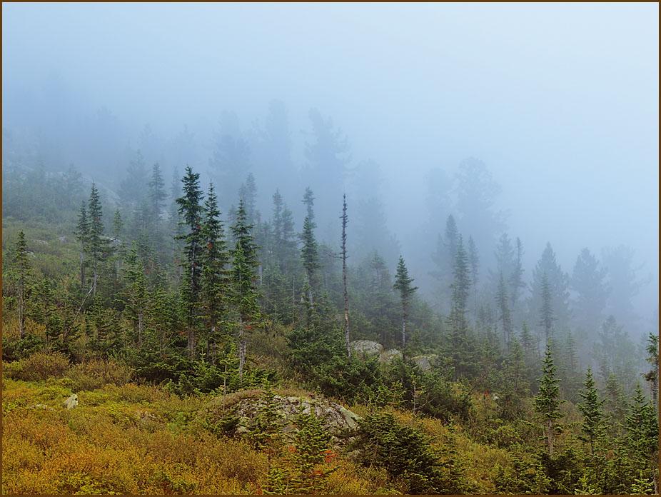 Люди едут за туманом