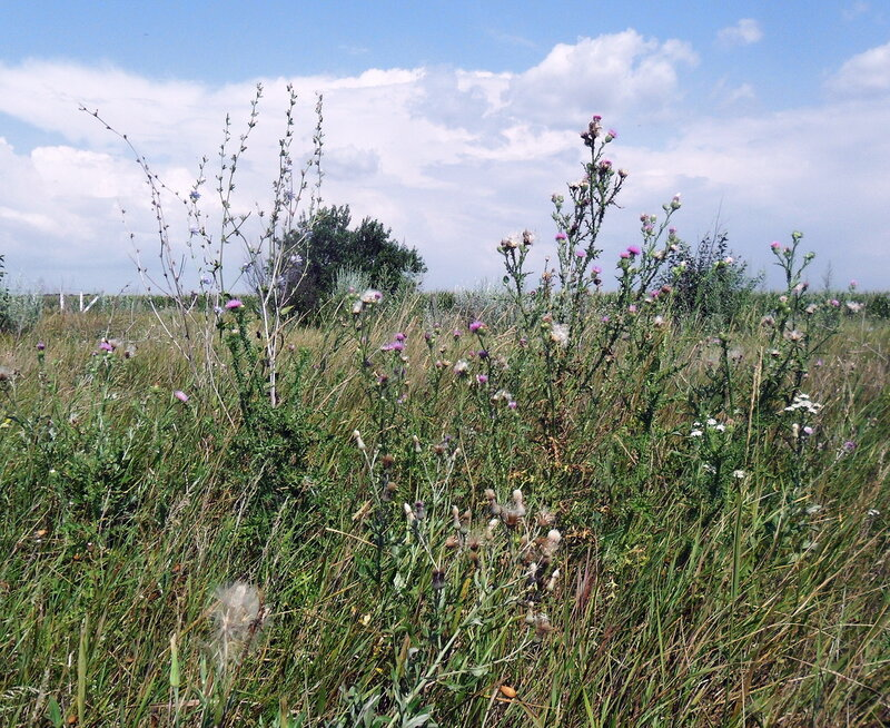 На пасеке... Лето 2012