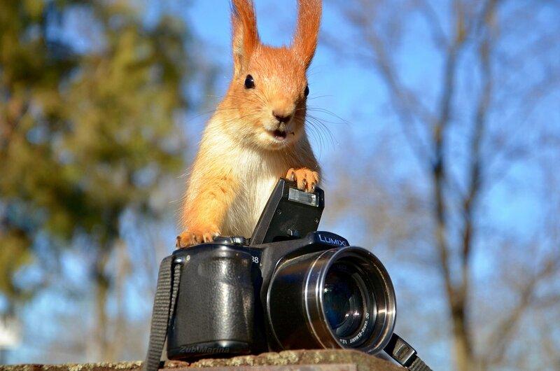 Бельчонок  и фотоаппарат