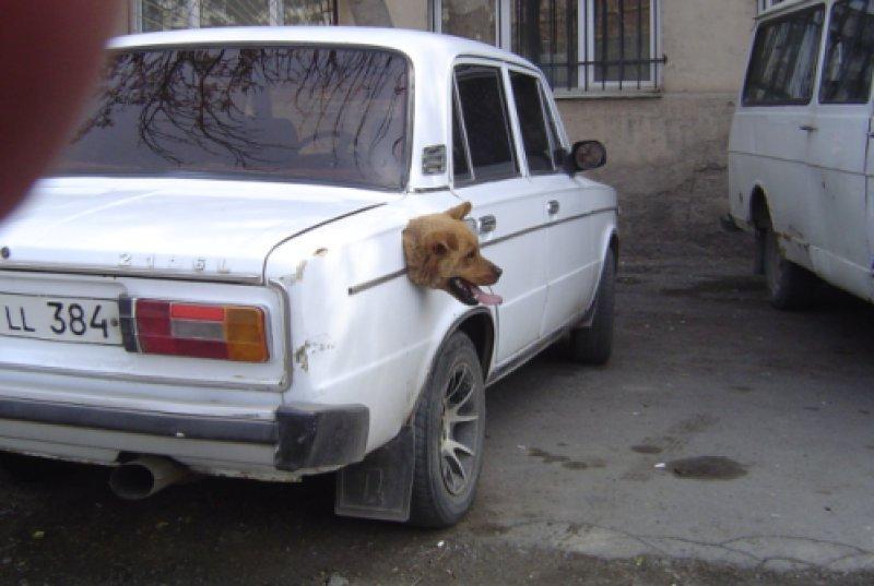 Голова собаки торчит из бензобака автомобиля прикольные фото