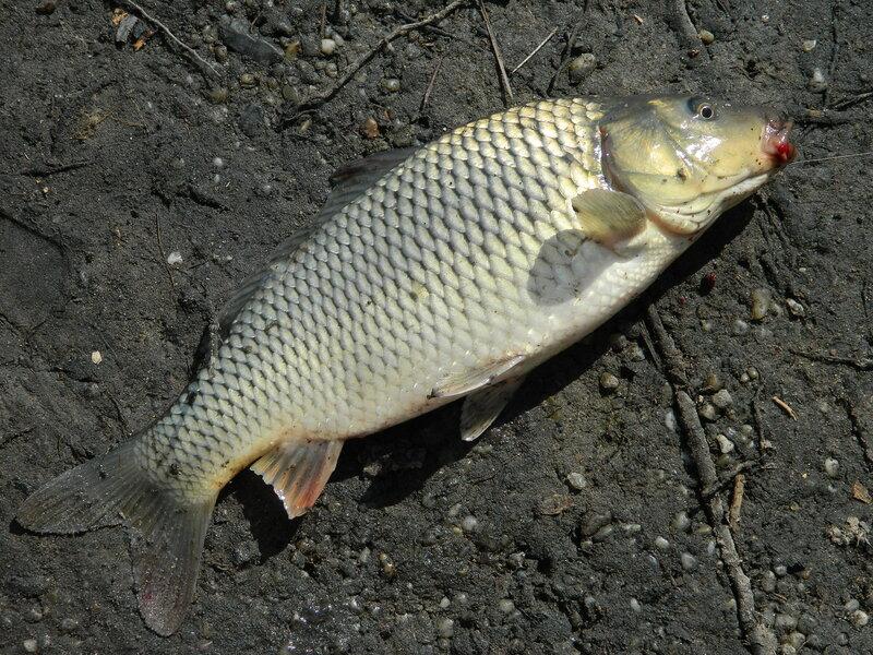 рыбалка на треустане