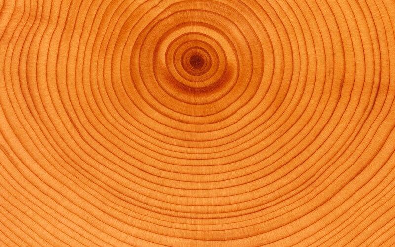 цвет дерева фото