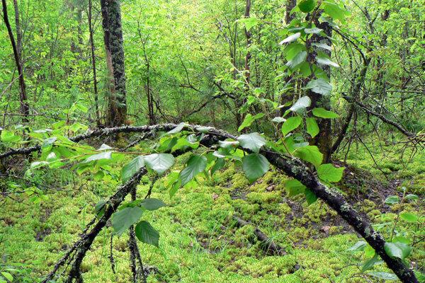 зелёное болото