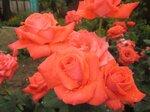 На фазенде рабыни Изауры.  (наши огородно-цветочные хвастики) 0_8022b_d4f65f76_S