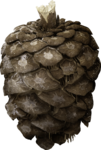 ial_slc_pinecone1.png