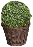 LottaDesigns_OldWorld_plant_1.png