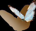 kimla_WFTS_butterfly_sh.png