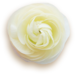 kimla_WFTS_flower1_sh.png