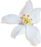 kimla_WFTS_flower2_sh.png