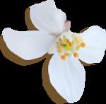 kimla_WFTS_flower3_sh.png