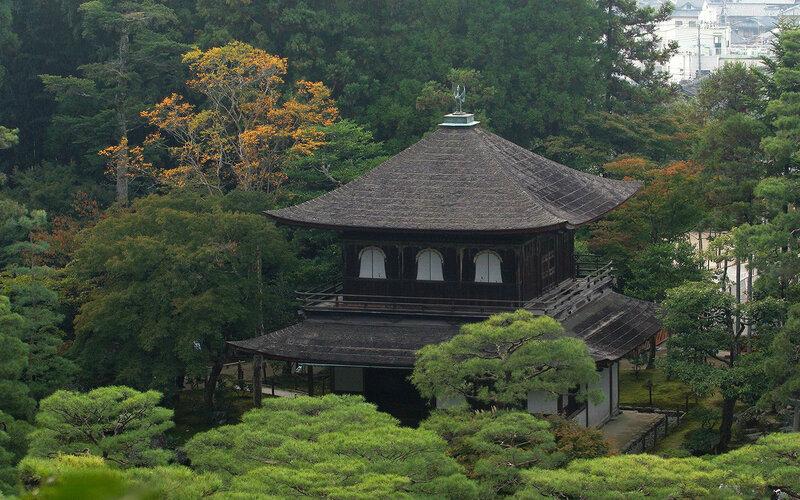 Картинка дерево сакуры