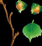 Hazelnuts4 [преобразовппанный].png