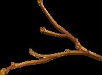 Hazelnuts5 [преобразованнырй].png