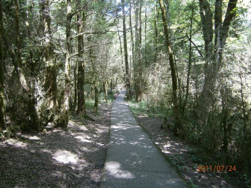 Тропинка в реликтовом лесу