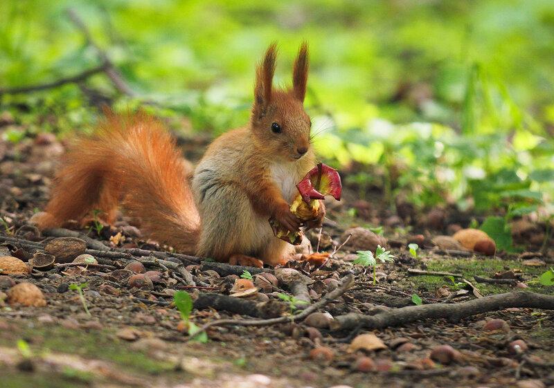 Sad squirrel