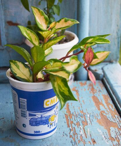 Растения полученные из Тюмени. Отзывы, хвасты!!! - Страница 2 0_64627_58e6cdc_L