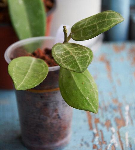 Растения полученные из Тюмени. Отзывы, хвасты!!! - Страница 2 0_64628_38ed4884_L