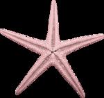 «Dreamin Pink» 0_99b23_29f7294_S