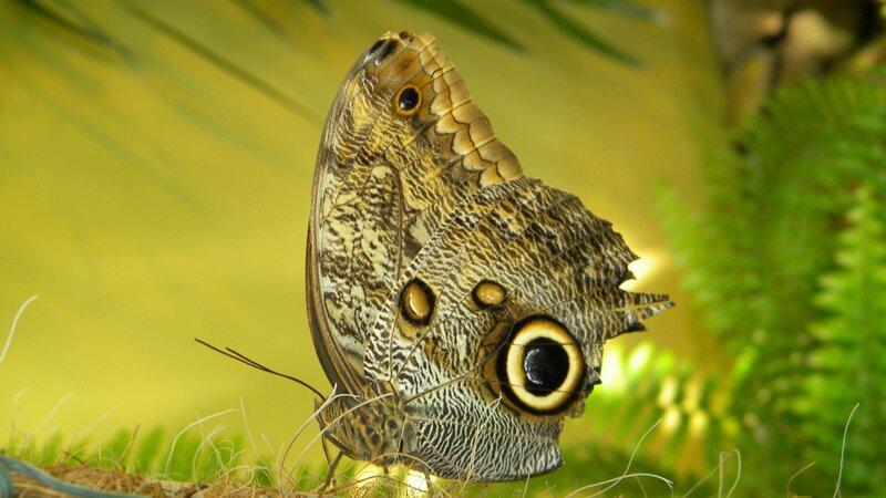 бабочка - шедевральное фото :)