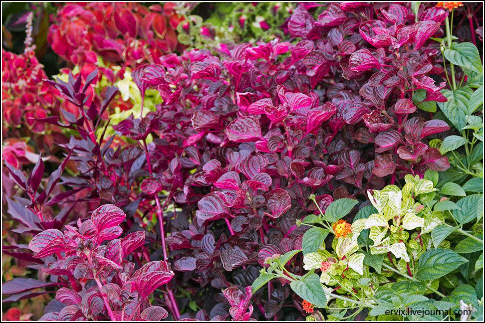 Цветовой карнавал листьев