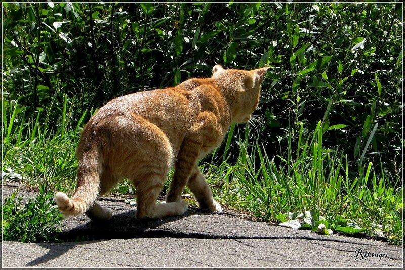 Тигра! ))