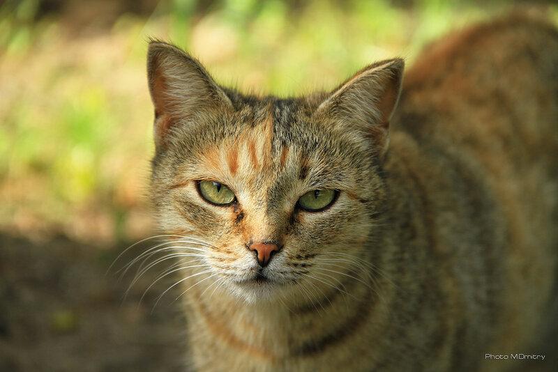 Кошки & Коты (2010)
