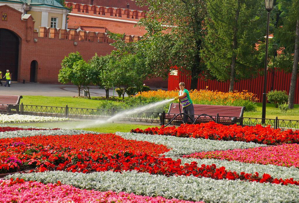 Клумбы в москве