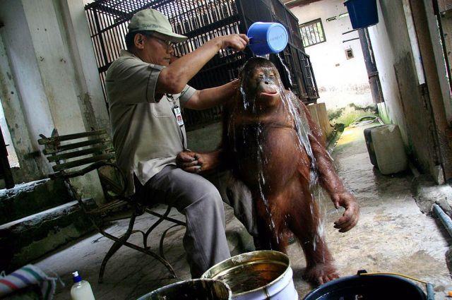 Мужик поливает обезьяну водой прикольные фото