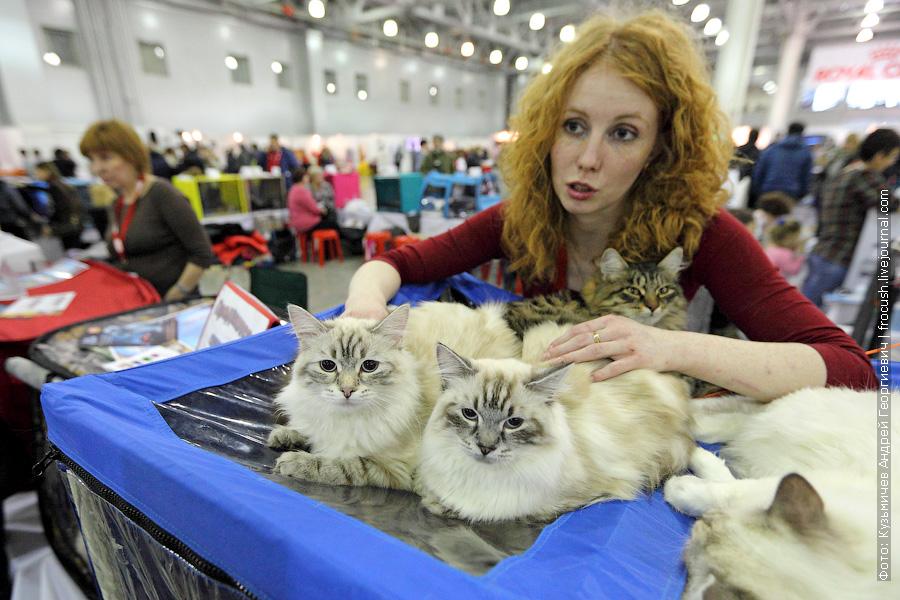 Невские маскарадные фотографии выставка кошек