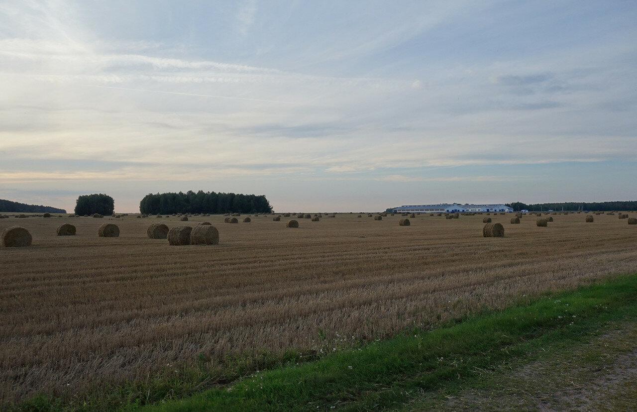 поле с рулонами сена и МТФ