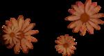 kimla_DN_flowers2.png