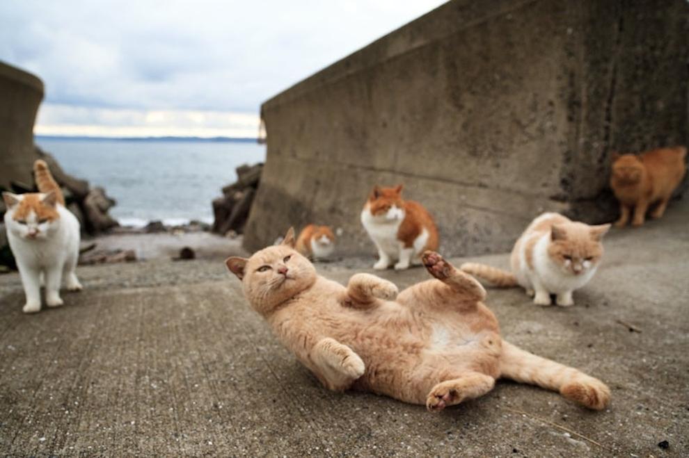Фото 38 - Кошачий рай в Японии