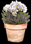 LottaDesigns_OldWorld_flower_pot_1.png