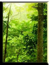 Малайзия. Лангкави. Фото szefei - Depositphotos