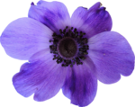 kimla_WFTS_flower4.png