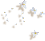 kimla_WFTS_flowers_sh.png